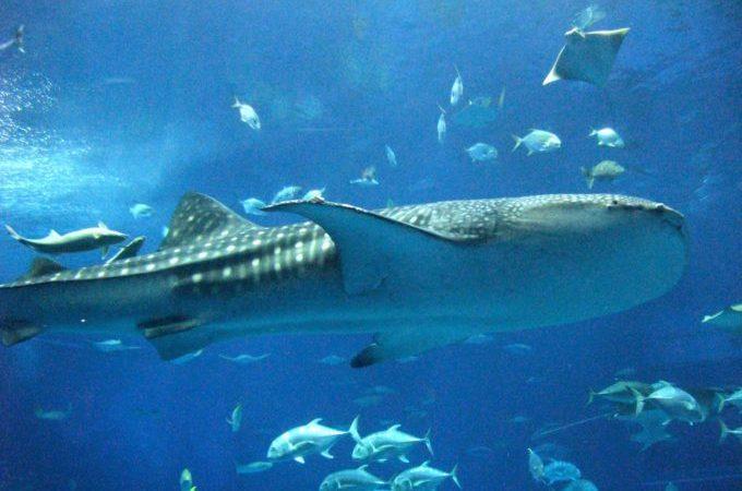 沖繩美之海水族館
